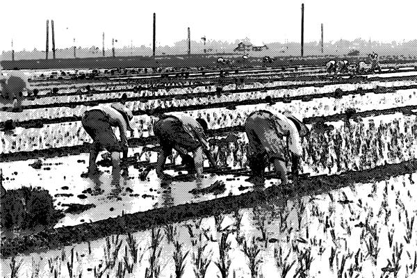 農家 小作人