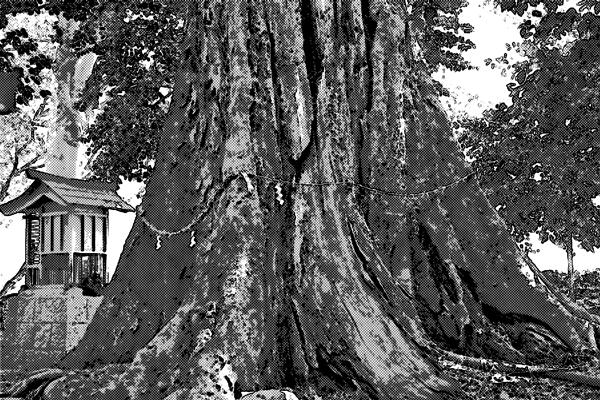 神社に立つ大木の隠された裏側には