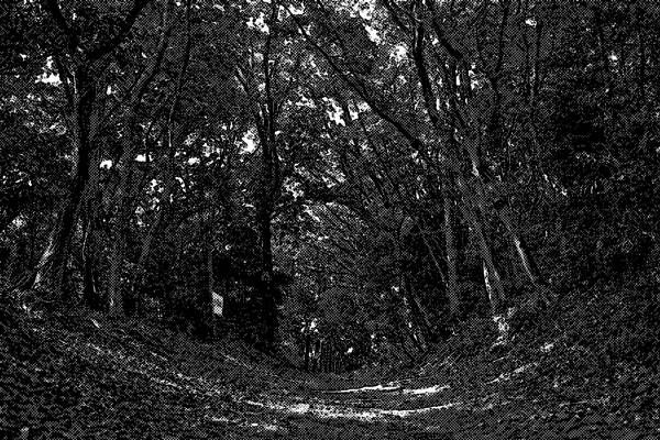 森林 絹の道