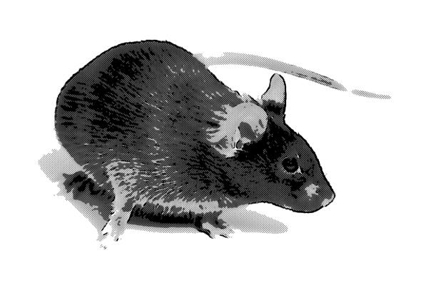 マウス ネズミ