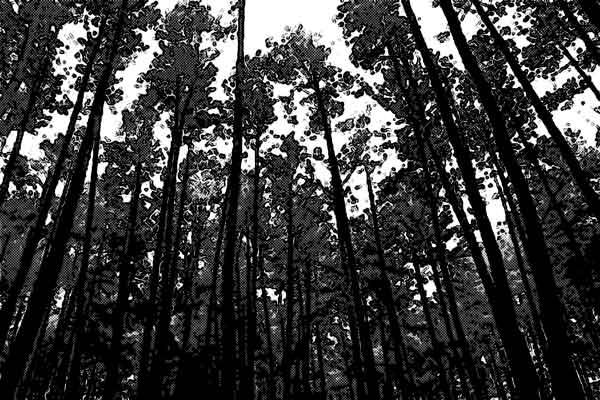 ジャングル 森林
