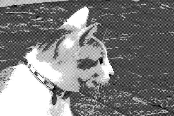 外遊びから帰ってきた飼い猫の首輪に