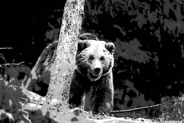 山で遭遇した着ぐるみのような熊