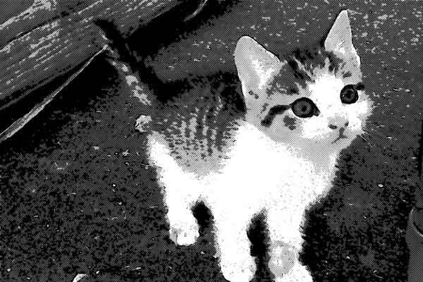 私の人生を変えた一匹の猫