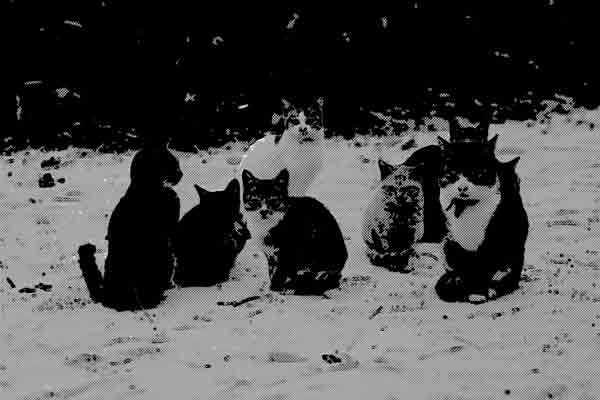 猫が会議をするっていうのは本当だった
