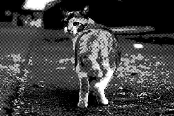 俺の小さい頃の親友は猫だった