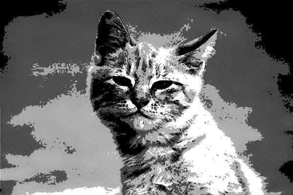 どうやら俺は猫らしい