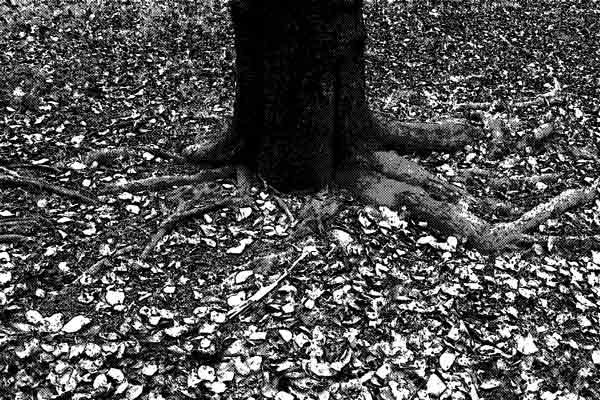 クヌギの木の下で安らかに眠る愛犬