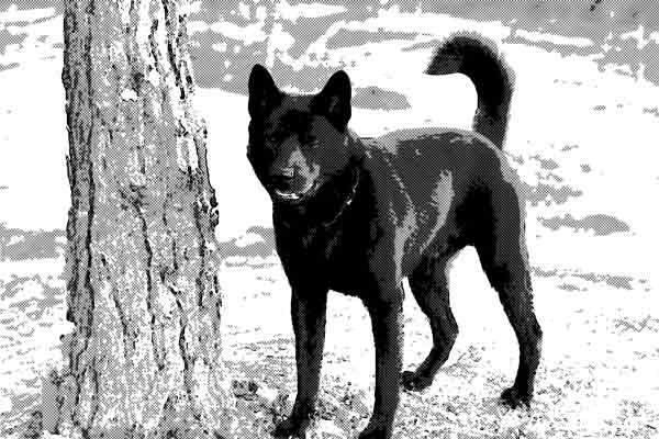 奇妙なことが多々あった頭の良い飼い犬